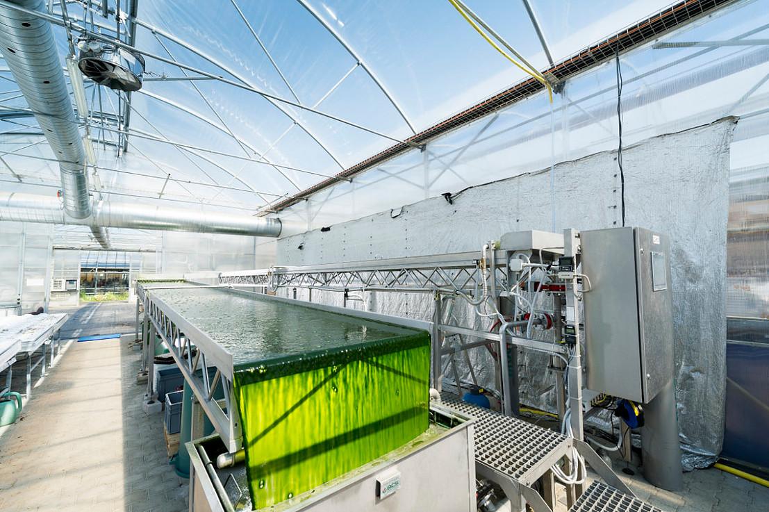 ZHAW open thin-layer bioreactor